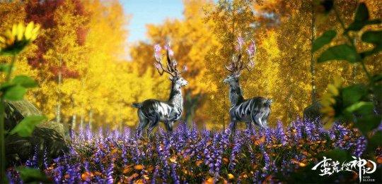 温顺灵动的鹿蜀.jpg