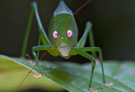 世界上12种最罕见的生物 你这辈子大概闻所未闻!