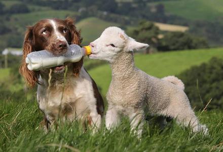 16只像人类一样会很热心帮助其他物种的超善良可爱动物!