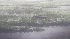 《DEEMO II》近日公布了全新概念预告片