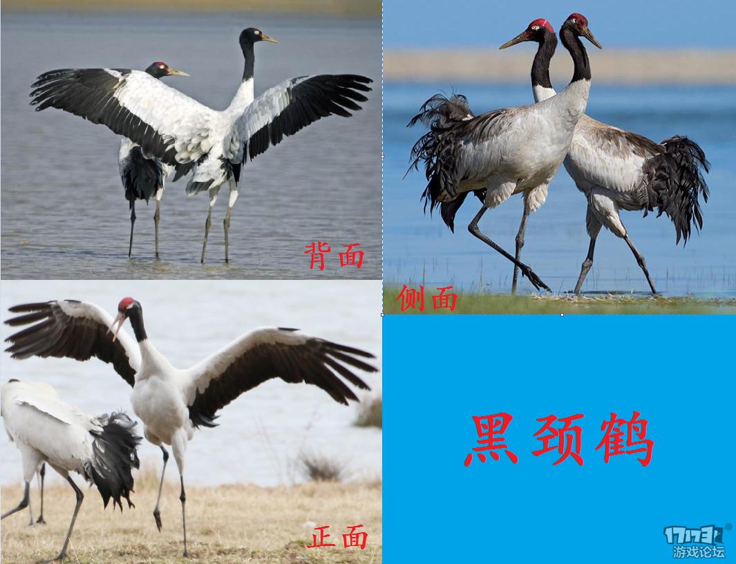 【中国风坐骑】黑颈鹤